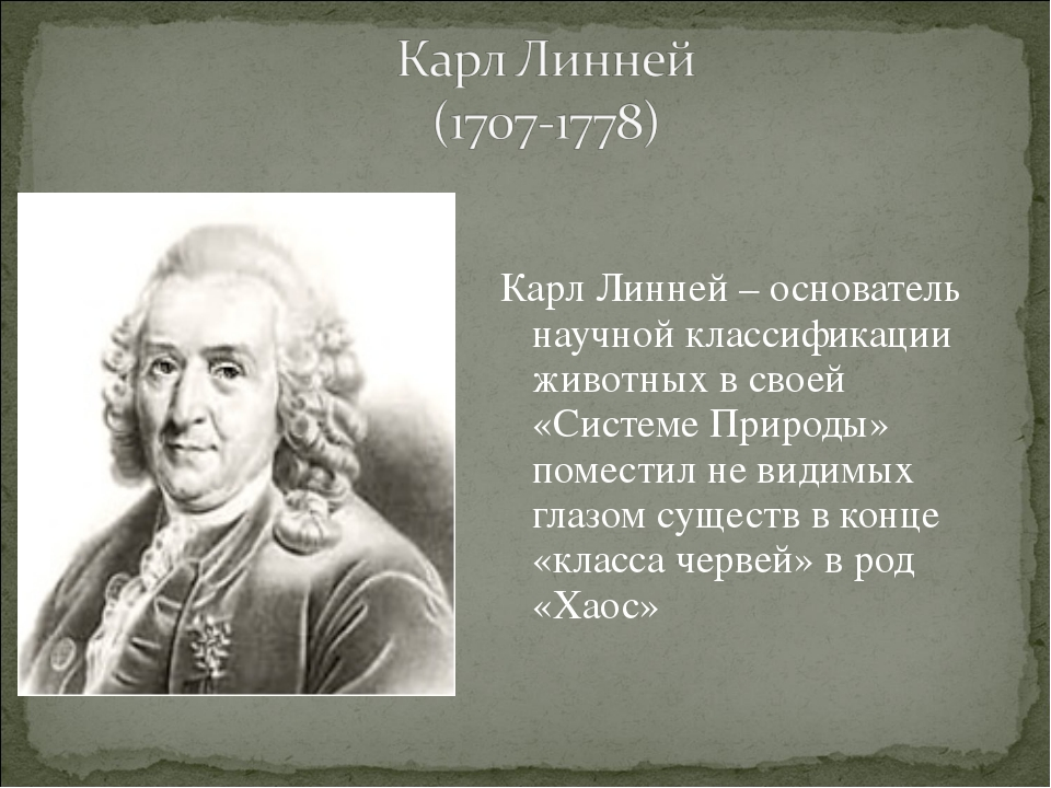 Карл Линней – основатель научной классификации животных в своей «Системе При...