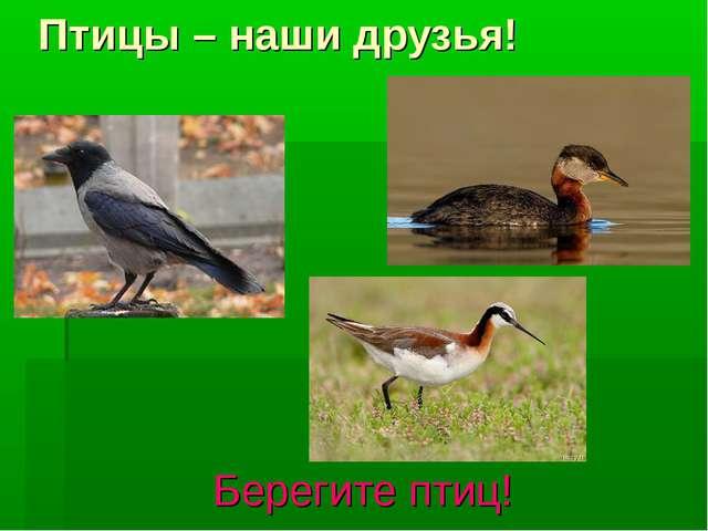 Птицы – наши друзья! Берегите птиц!