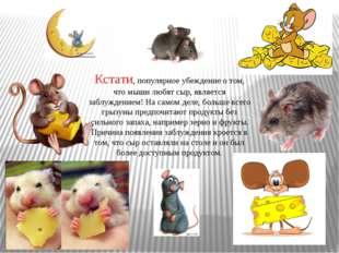 Кстати, популярное убеждение о том, что мыши любят сыр, является заблуждением