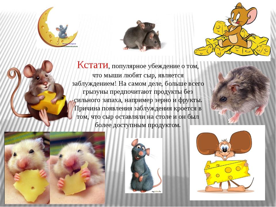 Кстати, популярное убеждение о том, что мыши любят сыр, является заблуждением...