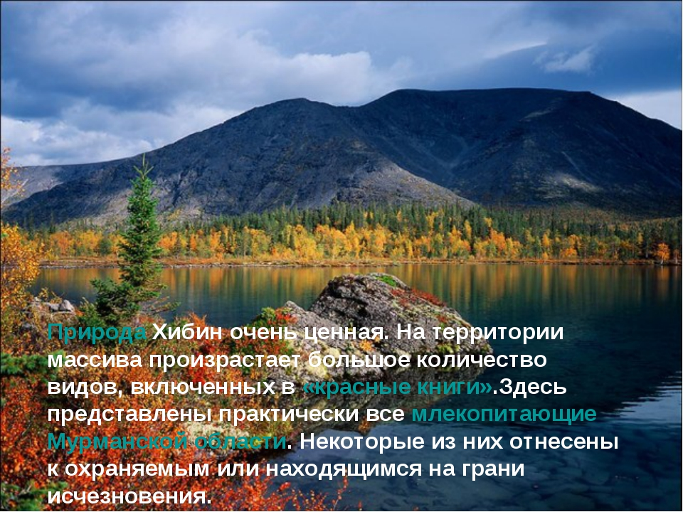 Природа Хибин очень ценная. На территории массива произрастает большое количе...