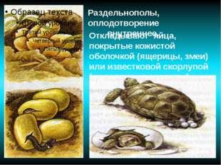 Откладывают яйца, покрытые кожистой оболочкой (ящерицы, змеи) или известковой