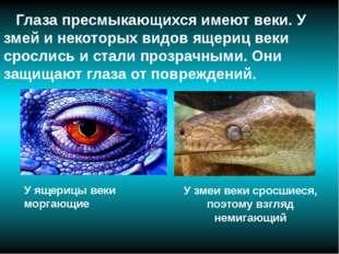 Глаза пресмыкающихся имеют веки. У змей и некоторых видов ящериц веки сросли