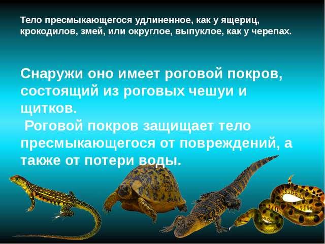 Тело пресмыкающегося удлиненное, как у ящериц, крокодилов, змей, или округлое...