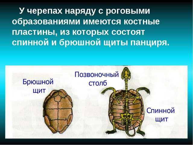У черепах наряду с роговыми образованиями имеются костные пластины, из котор...