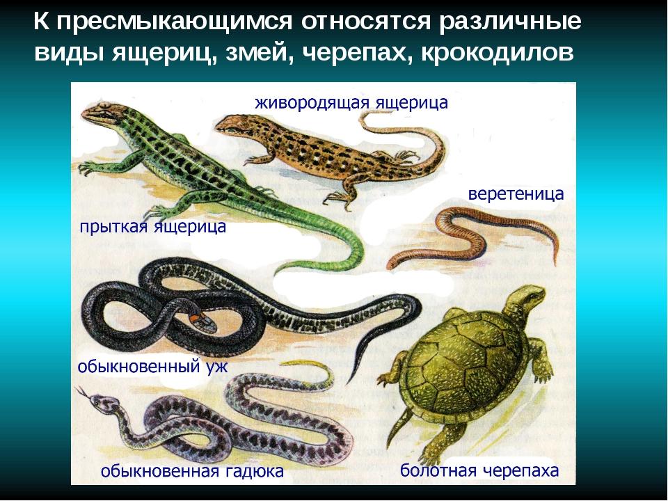 К пресмыкающимся относятся различные виды ящериц, змей, черепах, крокодилов