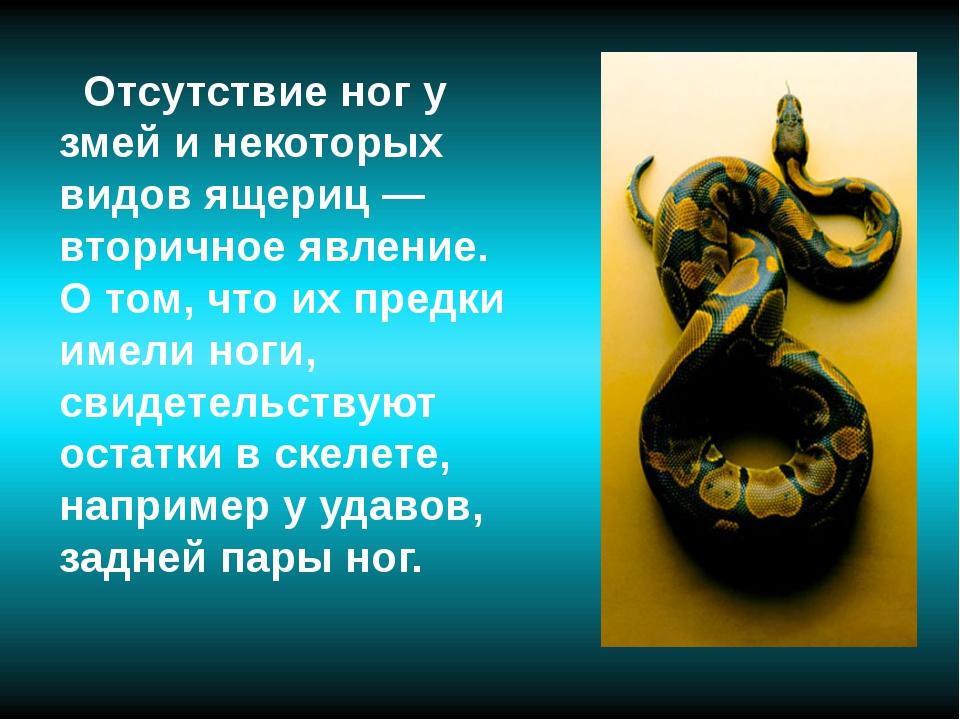 Отсутствие ног у змей и некоторых видов ящериц — вторичное явление. О том, ч...