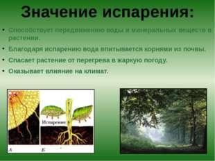 Способствует передвижению воды и минеральных веществ в растении. Благодаря и