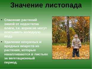 Спасение растений зимой от недостатка влаги, т.к. корни не могут впитывать х