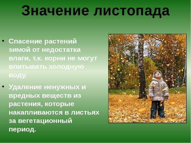 Спасение растений зимой от недостатка влаги, т.к. корни не могут впитывать х...