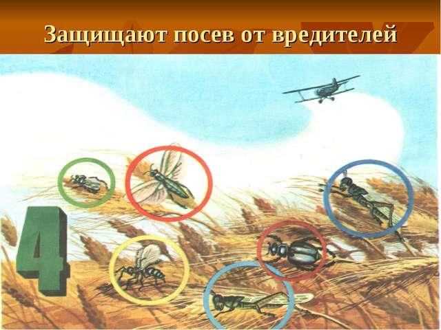 Защищают посев от вредителей