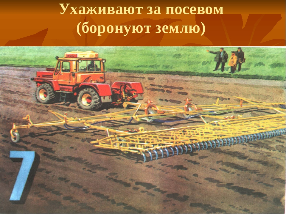 Ухаживают за посевом (боронуют землю)