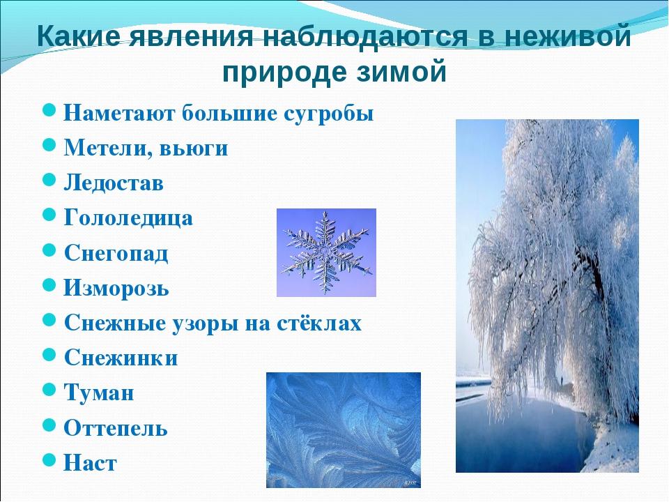 Какие явления наблюдаются в неживой природе зимой Наметают большие сугробы Ме...