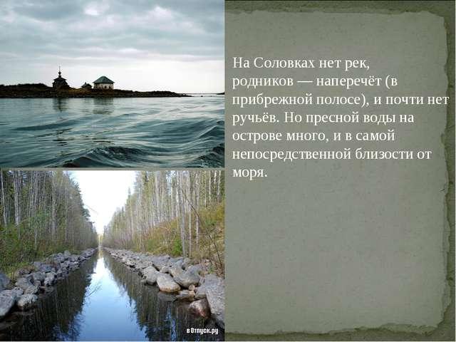 На Соловках нет рек, родников— наперечёт (в прибрежной полосе), и почти нет...