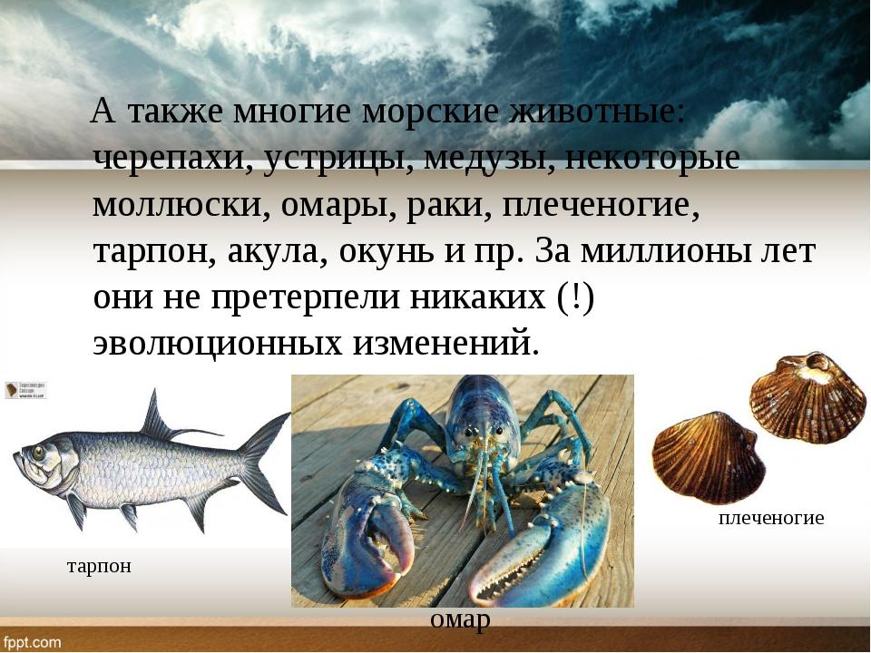 А также многие морские животные: черепахи, устрицы, медузы, некоторые моллюс...