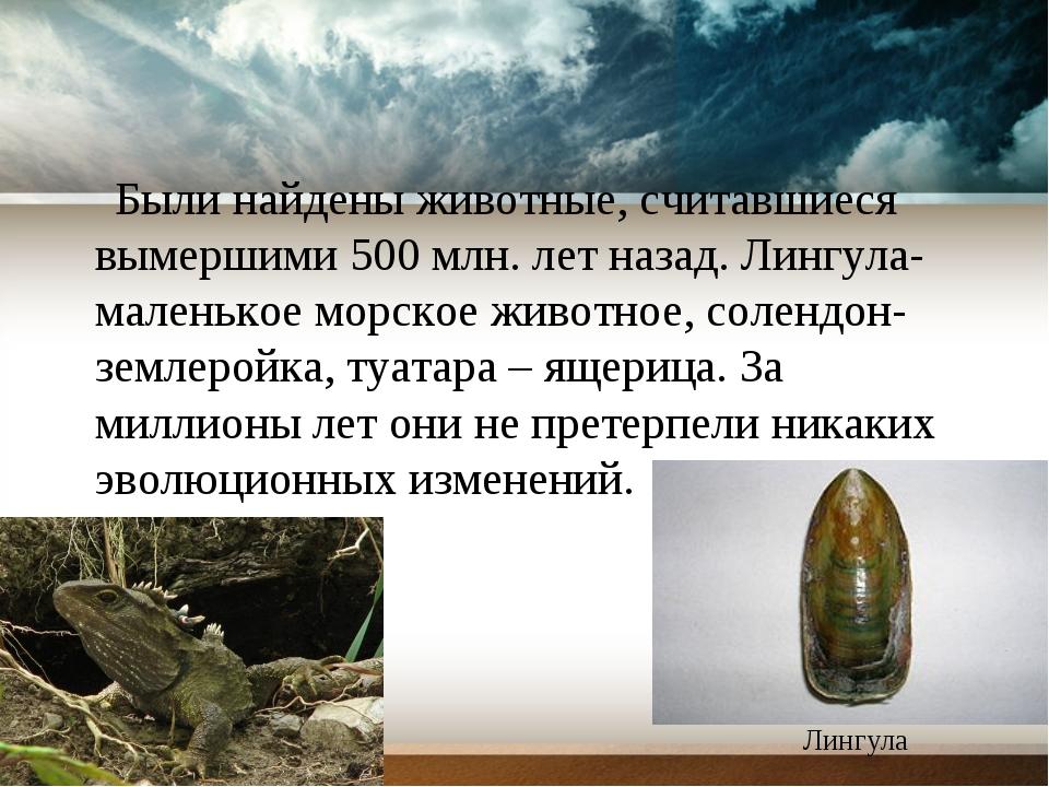 Были найдены животные, считавшиеся вымершими 500 млн. лет назад. Лингула- ма...