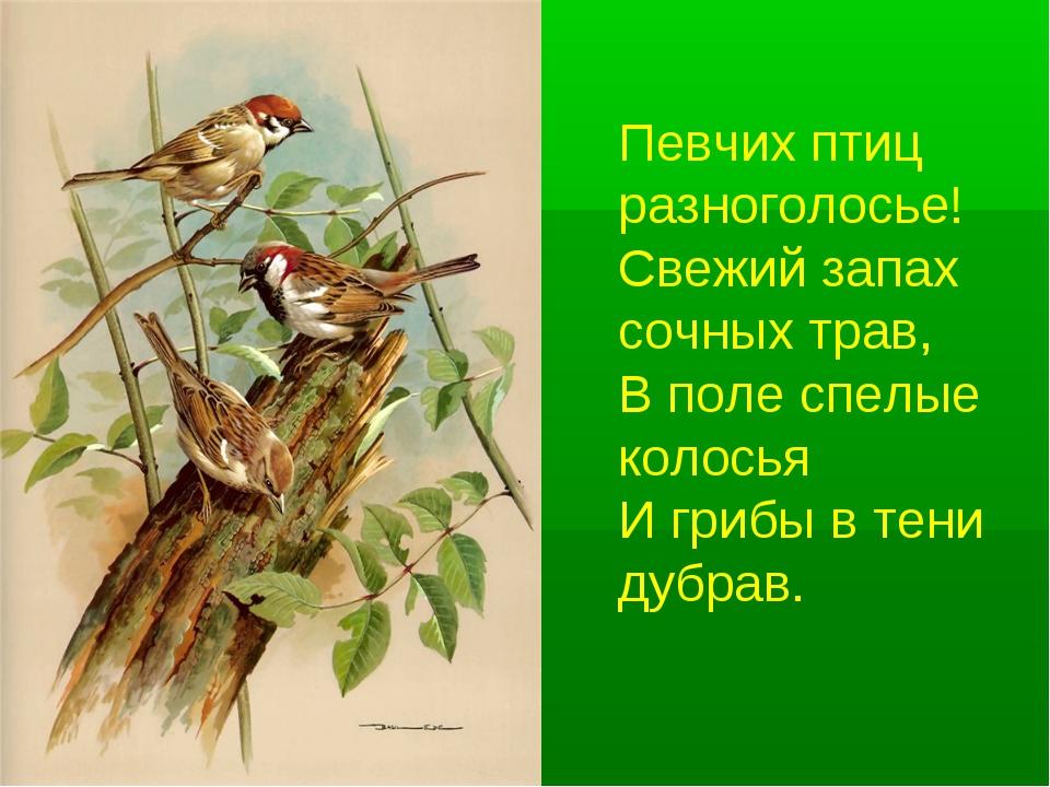 Певчих птиц разноголосье! Свежий запах сочных трав, В поле спелые колосья...