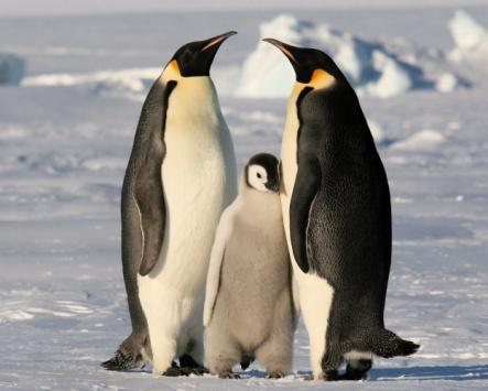Что будет если пощекотать пингвина?