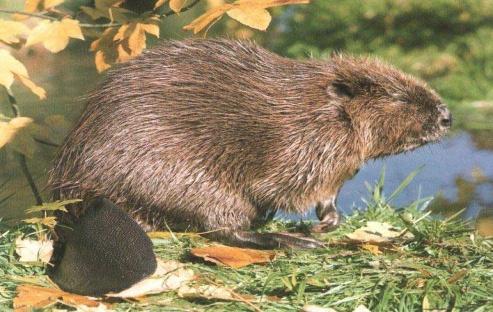 Обсуждение: В Челябинской области увеличилось число лосей, в…