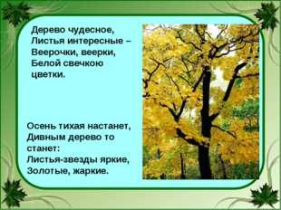 Дерево чудесное, Листья интересные – Веерочки, веерки, Белой свечкою цветки.