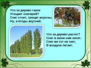 Что за дерево такое Угощает снегирей? Снег стоит, трещат морозы, Ну, а ягоды