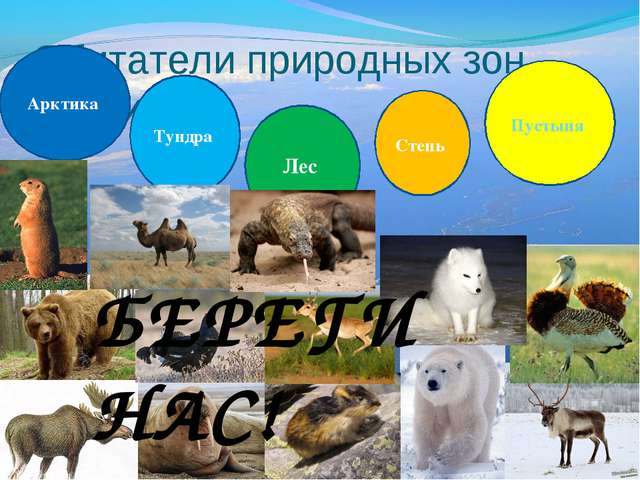Обитатели природных зон России Арктика Тундра Лес Степь Пустыня БЕРЕГИ НАС!