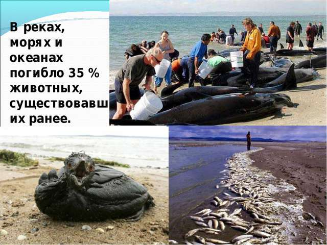 В реках, морях и океанах погибло 35 % животных, существовавших ранее.