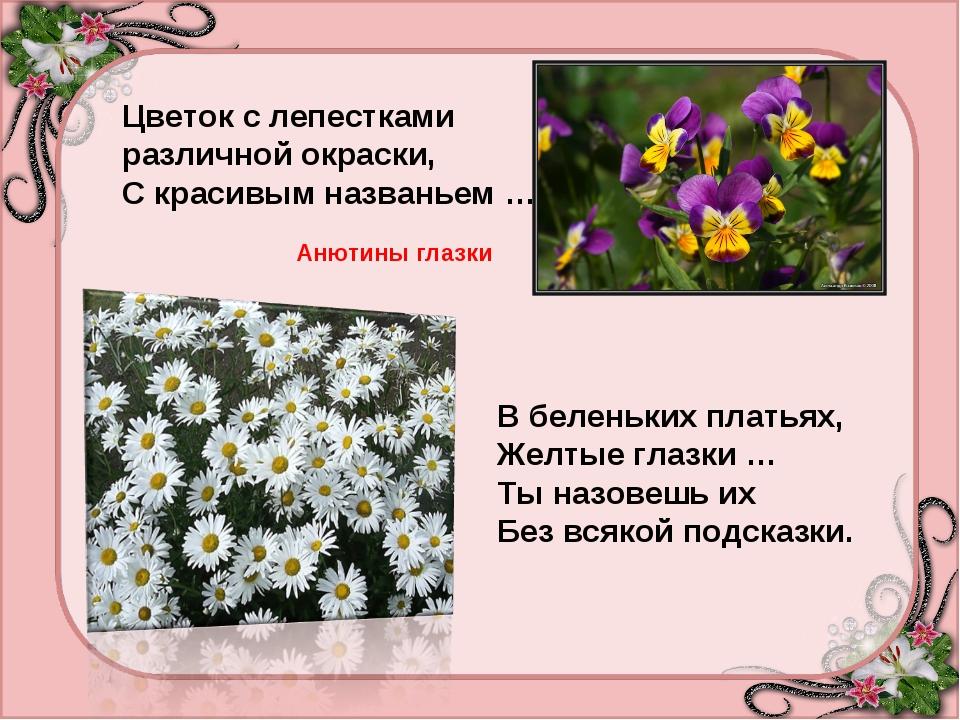 Цветок с лепестками различной окраски, С красивым названьем … Анютины глазки...