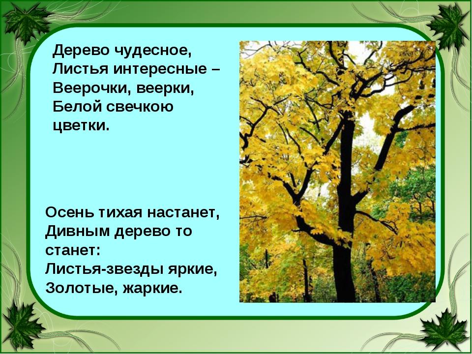 Дерево чудесное, Листья интересные – Веерочки, веерки, Белой свечкою цветки....