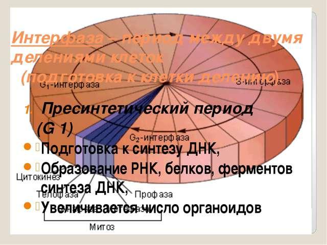 Интерфаза – период между двумя делениями клеток (подготовка к клетки делению)...