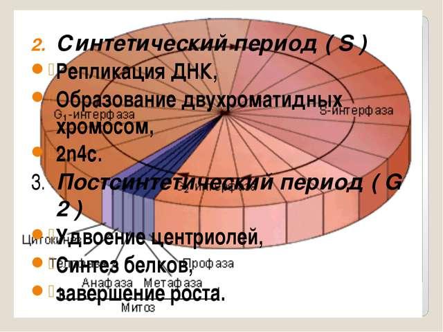 Синтетический период ( S ) Репликация ДНК, Образование двухроматидных хромос...