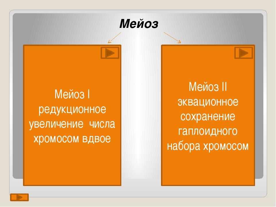 Мейоз Мейоз I редукционное увеличение числа хромосом вдвое Мейоз II эквацион...