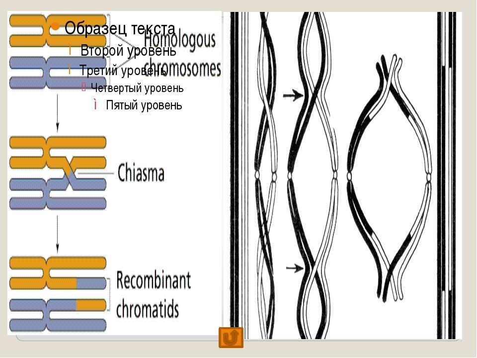 «Сравнение процессов митоза и мейоза» митоз мейоз сходства отличия