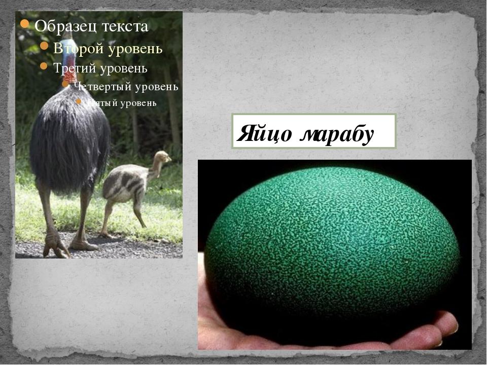 Яйцо марабу