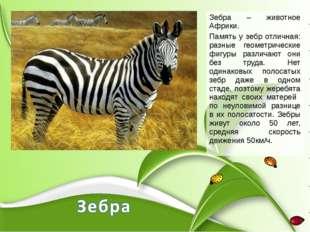 Зебра – животное Африки. Память у зебр отличная: разные геометрические фигуры