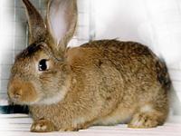 Кролик (Кот) - символ 2011 года, что он нам несет