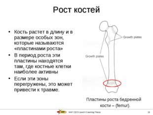 IAAF CECS Level II Coaching Theory * Рост костей Кость растет в длину и в раз
