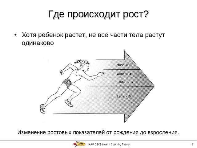IAAF CECS Level II Coaching Theory * Где происходит рост? Хотя ребенок растет...
