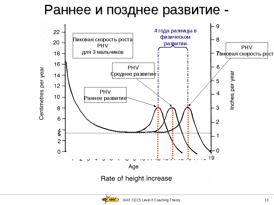 IAAF CECS Level II Coaching Theory * Раннее и позднее развитие - мальчики 5 П...