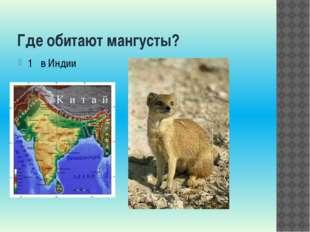 Где обитают мангусты? 1 в Индии 2 в Италии 3 во Франции 4 в Испании