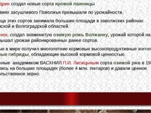 А.П.Шехудрин создал новые сорта яровой пшеницы в условиях засушливого Поволжь