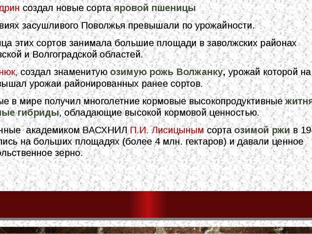 А.П.Шехудрин создал новые сорта яровой пшеницы в условиях засушливого Поволжь...