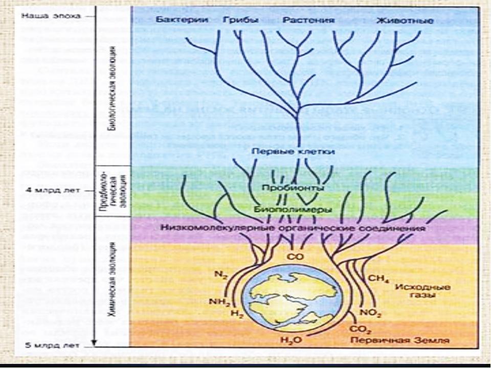 Основные этапы формирования биосферы Внимательно рассмотрим предложенную схему.
