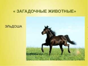 « ЗАГАДОЧНЫЕ ЖИВОТНЫЕ» ЭЛЬДОША