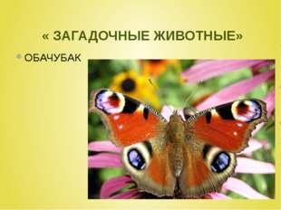 « ЗАГАДОЧНЫЕ ЖИВОТНЫЕ» ОБАЧУБАК
