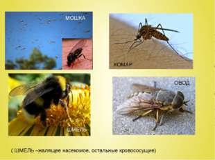( ШМЕЛЬ –жалящее насекомое, остальные кровососущие) МОШКА КОМАР ОВОД ШМЕЛЬ