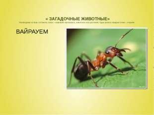 « ЗАГАДОЧНЫЕ ЖИВОТНЫЕ» Необходимо из букв составить слово – название насеком