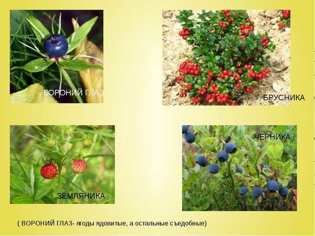 ( ВОРОНИЙ ГЛАЗ- ягоды ядовитые, а остальные съедобные) ЗЕМЛЯНИКА ЧЕРНИКА БРУ...
