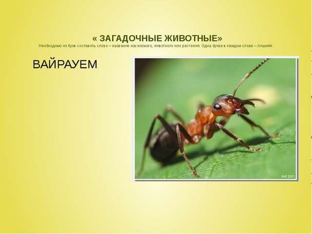 « ЗАГАДОЧНЫЕ ЖИВОТНЫЕ» Необходимо из букв составить слово – название насеком...