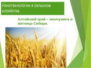 Нанотехнологии в сельском хозяйстве. Алтайский край – жемчужина и житница Сиб